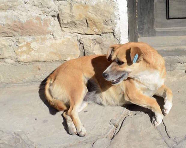 Пятигорск бьет тревогу: в городе массово истребляют собак