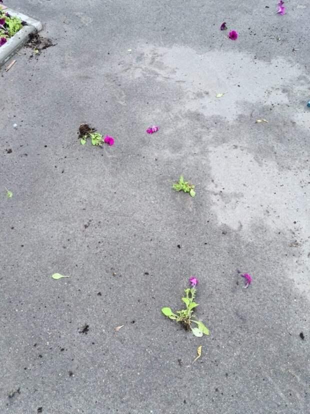 В парке «Проектный» малолетние вандалы испортили клумбу