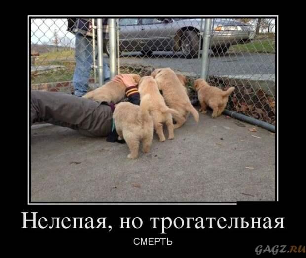 1422997370_demotivatory_13