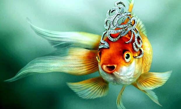 Казус золотой рыбки....