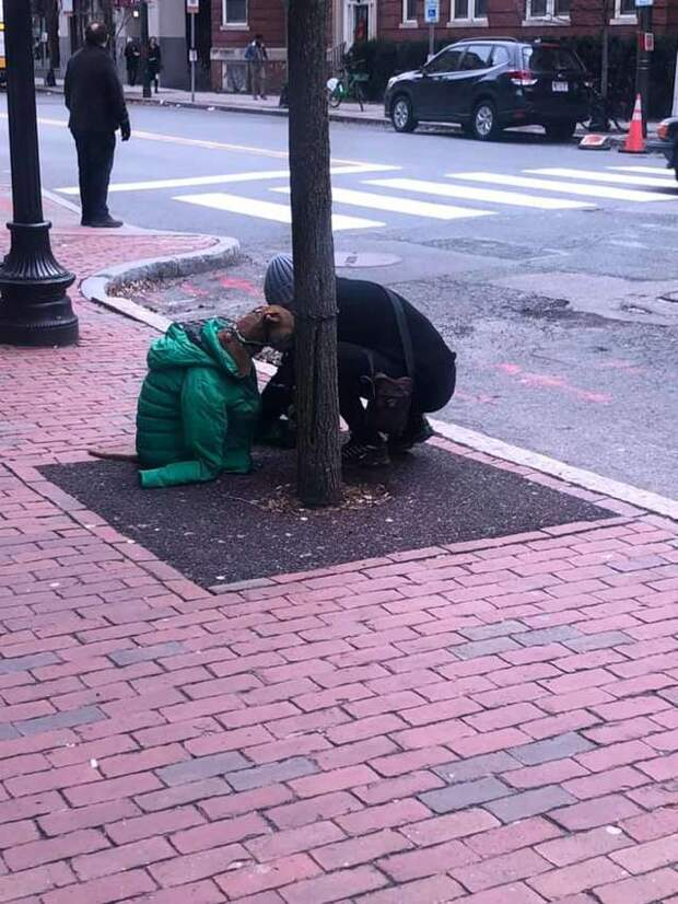 Девушка надела на собаку свою куртку чтобы он не замерз