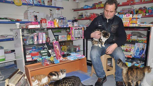 Именно так поступил Сельчук Байал, приютивший в своем магазине кошек буря, животные, снег, спасение, стамбул