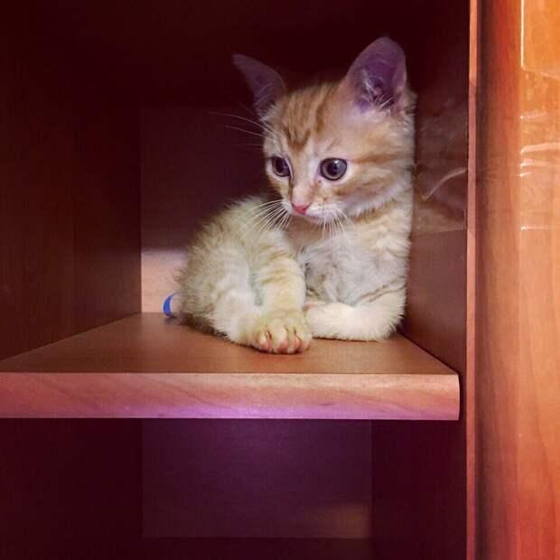 В этом мире стало одним счастливым котёнком больше!