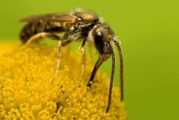 insects54 Портреты насекомых