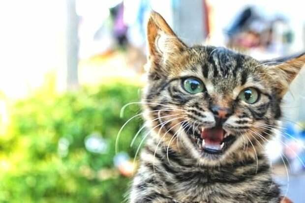 Поразительные истории об общении с котами