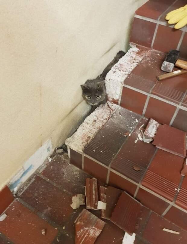 Женщина услышала странные звуки из-под лестницы. Пришлось вызывать пожарных