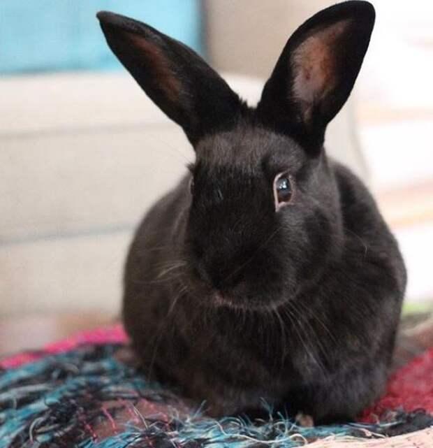 Поначалу крольчиха Энни ревновала хозяйку к щенку, а потом взяла и стала его лучшим другом
