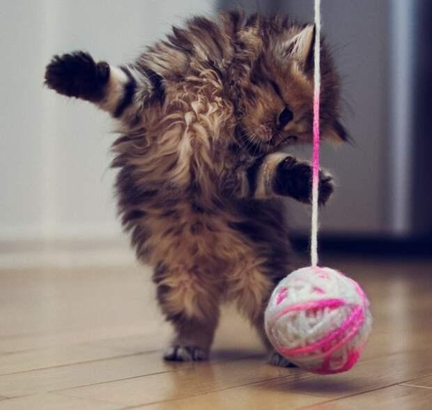 Фотограф Ben Torode. Фотосессия котёнка.