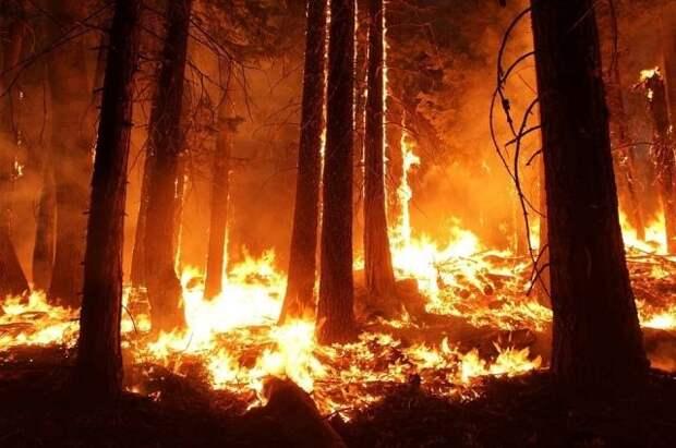 Площадь лесных пожаров в России за сутки выросла в 1,5 раза