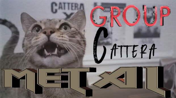 В США появилась «кошачья» метал-группа Cattera