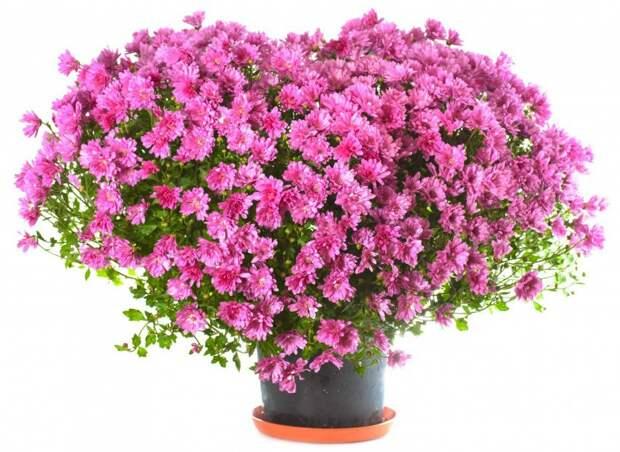 10 лучших цветов в горшках