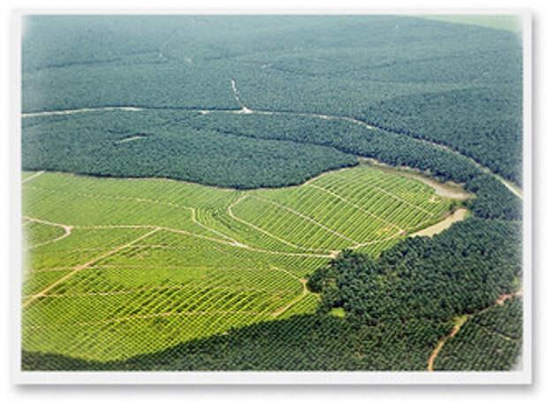 Фото №5 - Критическое масло: мифы и правда о пальмовом масле