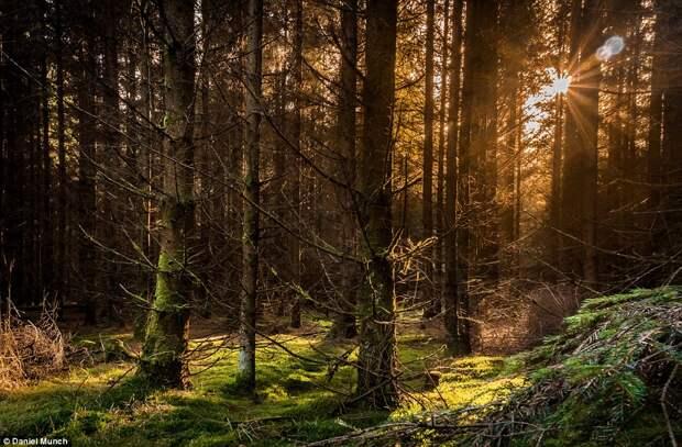 Лесной массив Ролд Сков в Дании