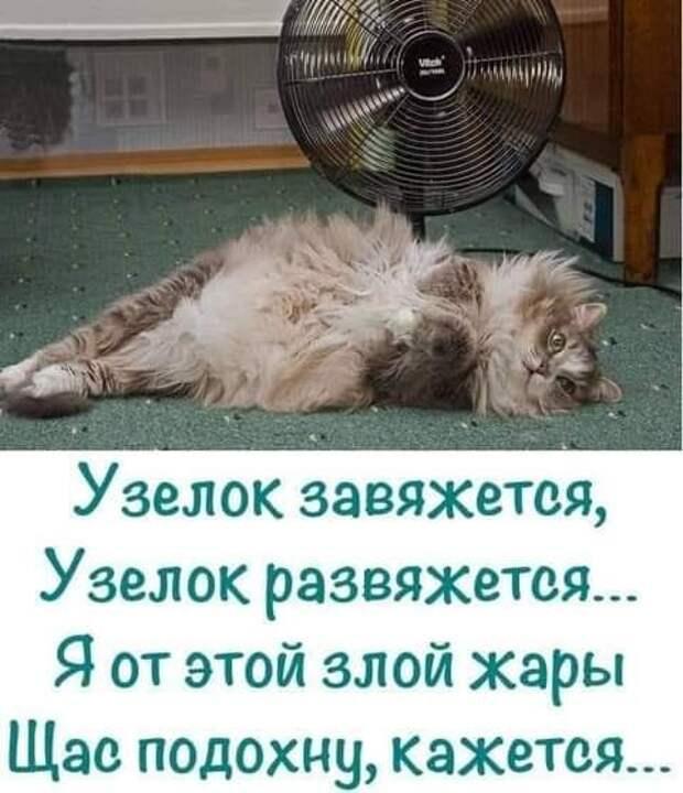 Возможно, это изображение (кот и текст «узелок завяжется, узелок развяжется... я от этой злой жары щас подохну, кажется...»)