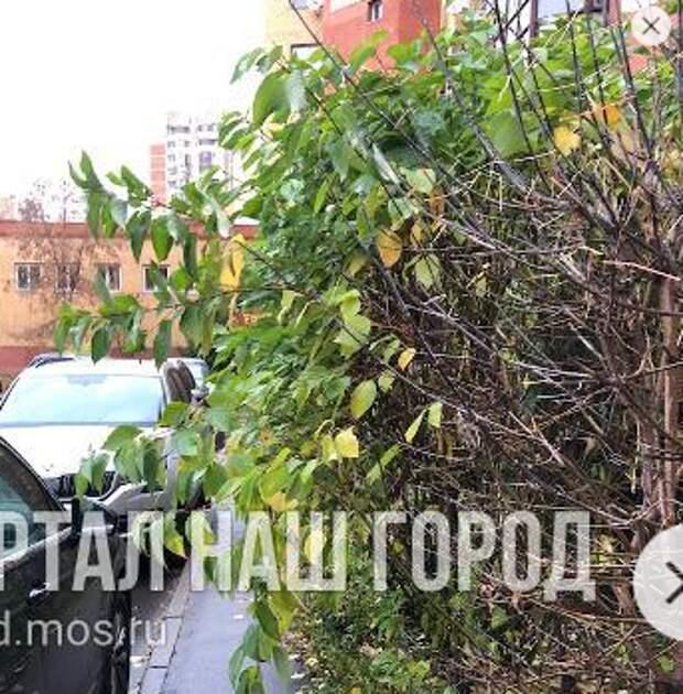 На улице Соловьиная Роща обрезали опасные ветки
