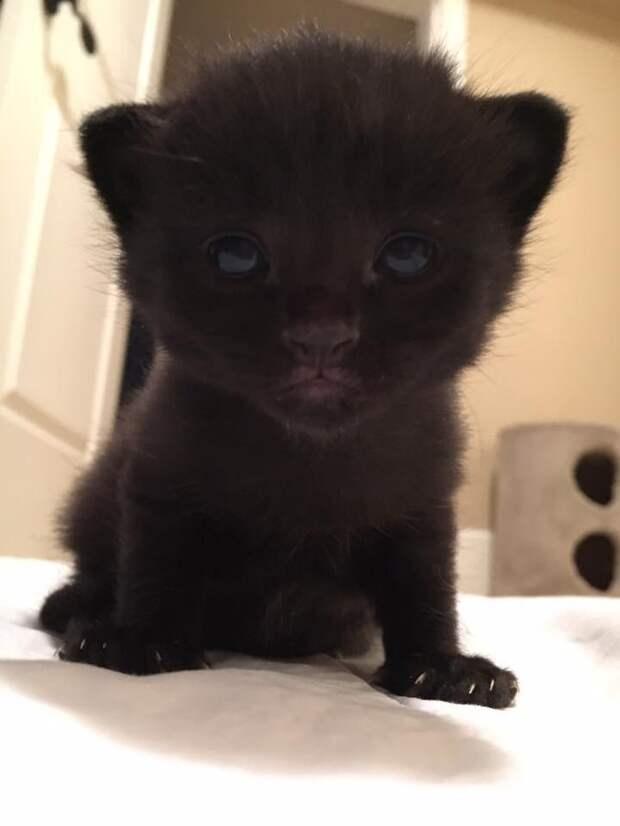 Владелец этой кошки переехал и оставил ее на улице. Вдруг сосед заметил ее растущий живот…