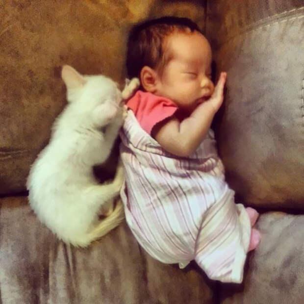 Они познакомились, когда были еще совсем маленькими  девочка, дружба, кот
