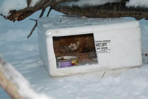"""Стоп – а что за коробка?! """"Тот, кто оставил этих бедняг, видимо, считает себя великодушным…"""", – подумал мужчина, заглянув внутрь…"""