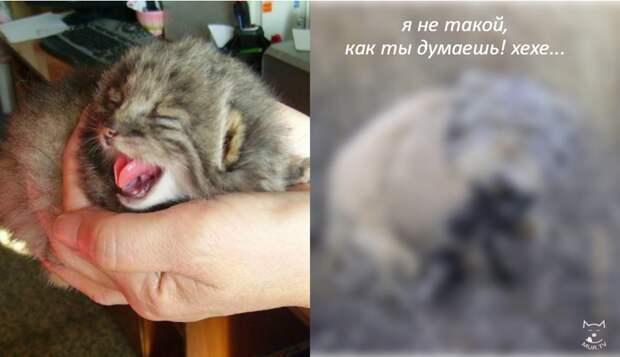 Хозяин нашёл в сарае горстку котят и решил усыновить… Но что это?! Такого шикарного сюрприза он никак не ожидал!!! :)