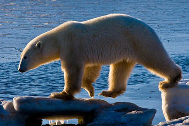 Символом России признали медведя