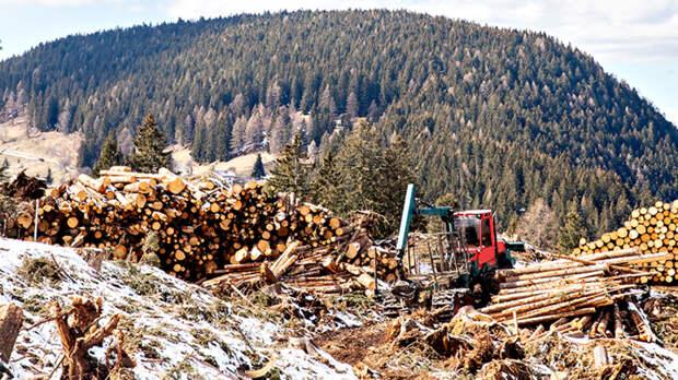 Проредят чащу: Олигархов выгоняют из леса