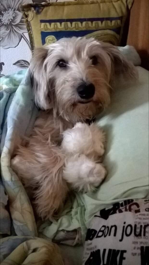 1 января на пустынной улице замерзал щенок. Когда силы почти покинули малыша, до него дотронулись чьи-то тёплые руки