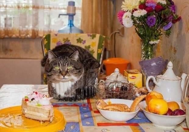 Кот сидит на столе