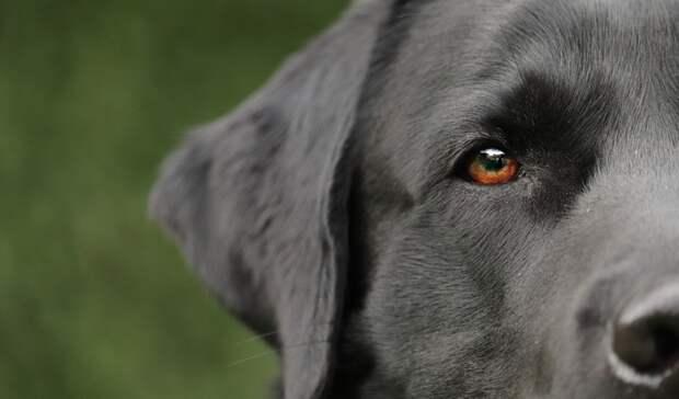 Ростовчане спасли собаку, голова которой застряла вбанке