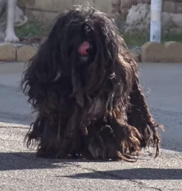 Заросшая собака