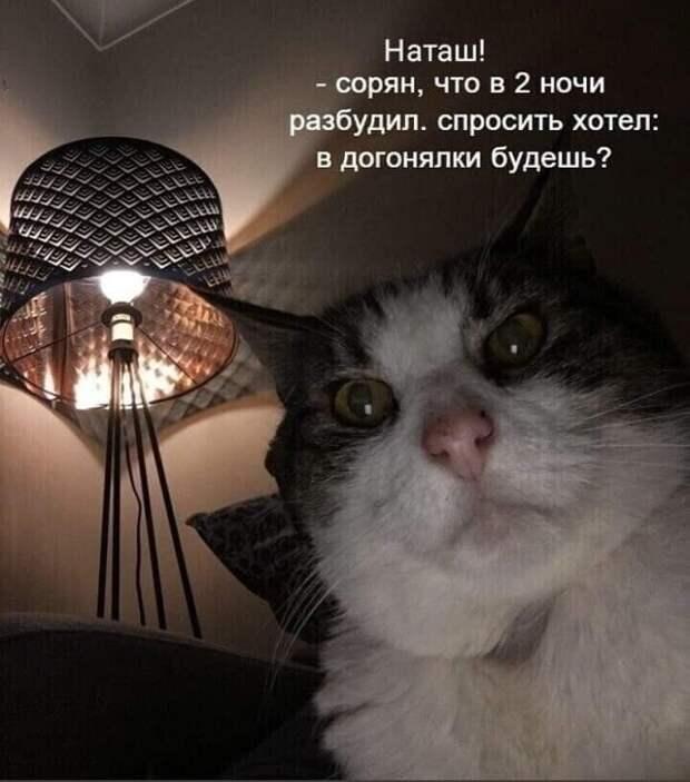 Возможно, это изображение (1 человек, кот и текст «наташ! -сорян, что в 2 ночи разбудил. спросить хотел: в догонялки будешь?»)