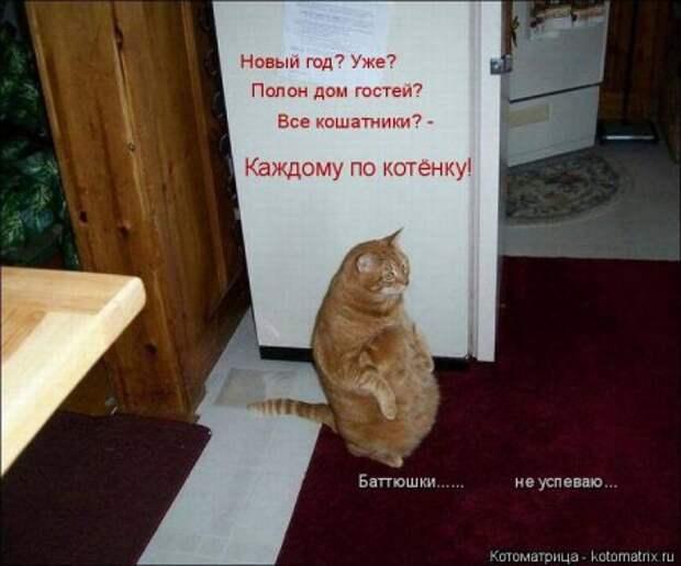 1451492418_kotomatritsa_e8