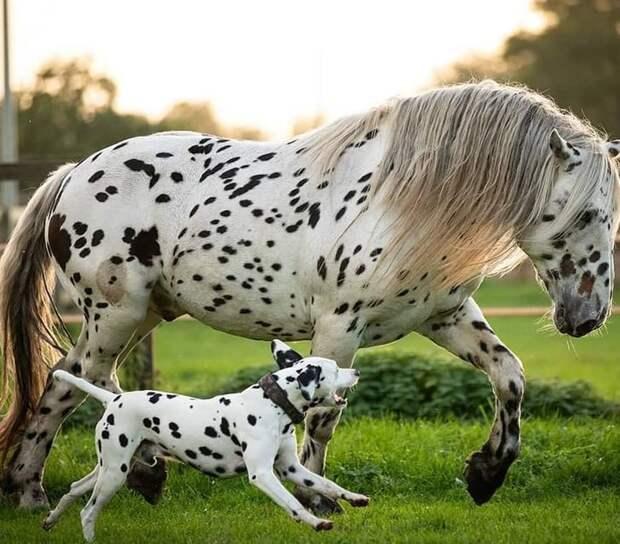 7 удивительных фото животных, над которыми очень постаралась природа