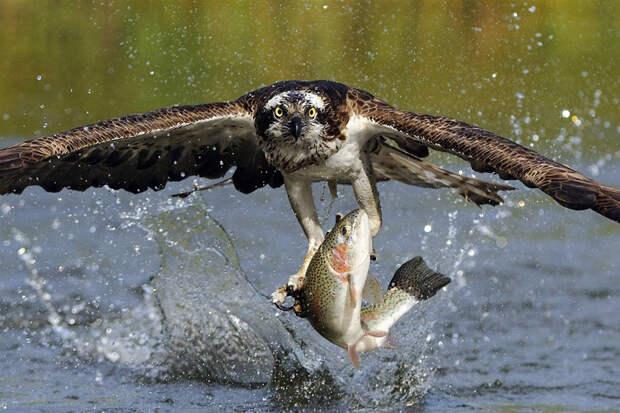 Обитатели дикой природы
