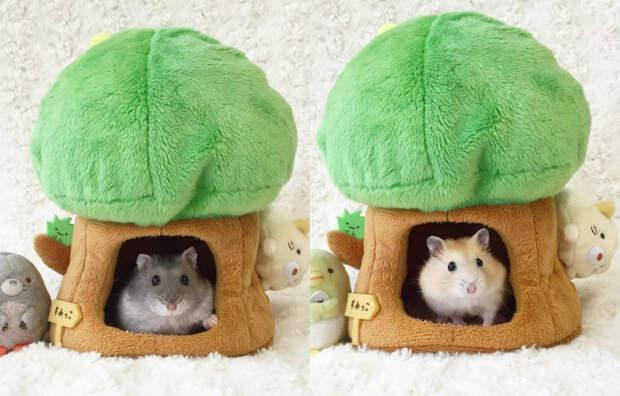 Крохотные японские сестренки-хомяки покоряют интернет своими милыми трапезами