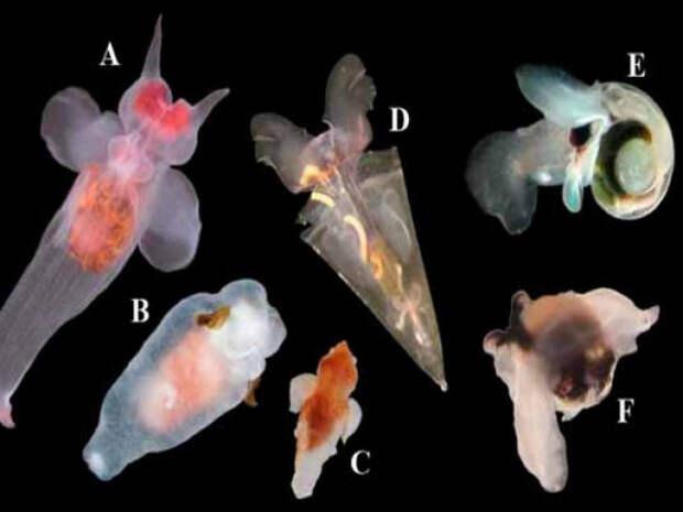 Учёные обнаружили у Камчатки сотни неизвестных науке организмов