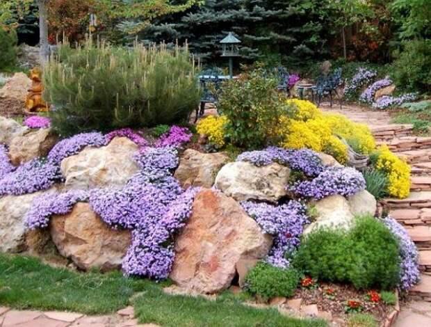 Без цветов альпийская горка была бы всего лишь грудой камней