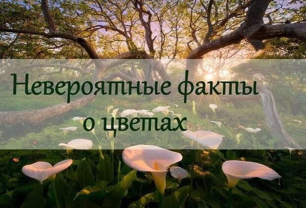 Цветы — это, наверное, самое красивое и изысканное творение природы, любоваться которым можно вечно