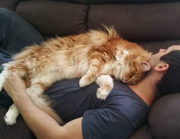 Почему многие коты предпочитают спать, умостившись на человека сверху