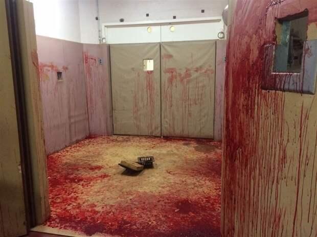 Последствия носового кровотечения у лошади жизнь, интересные, фото
