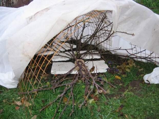 Чем укрыть растения на зиму