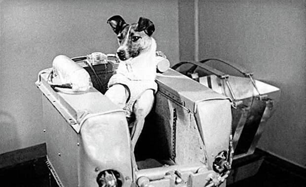 Юрий Гагарин – жертва величайшей советской космической авантюры века?