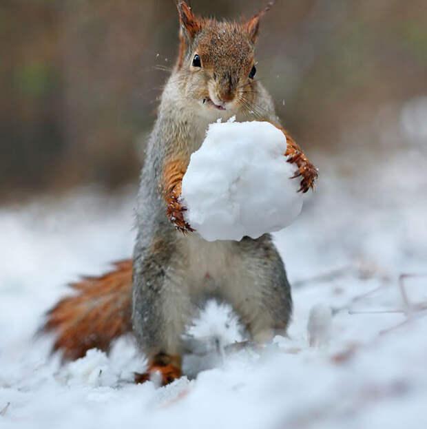 Улыбнитесь... Животные и снег. Забавные фото