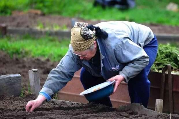 Золовка забирает у свекрови урожай с дачи и отдает деньги. Свекры пашут из последних сил, а урожай идет в помойку – золовка такое не ест