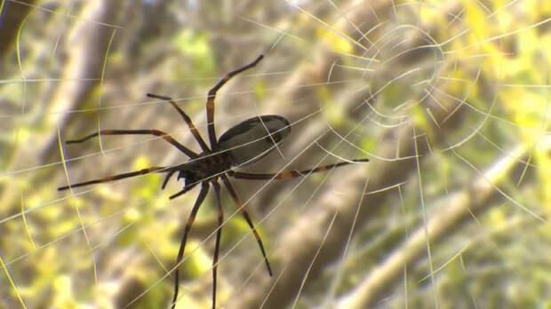 Дайджест: паутина как модный аксессуар, самый маленький птенец в мире и муравьи, которые уменьшают мозг