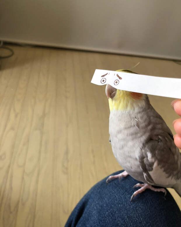 Строим глазки! Бумажная полоска поднимает настроение попугаю и его хозяевам