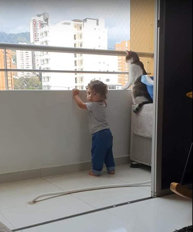 Заботливый кот не позволяет малышу перелезть через перила балкона