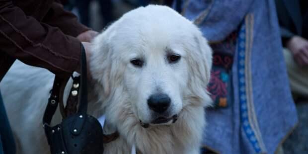 В Петровском парке нашли возможные «лакомства» для собак от догхантеров