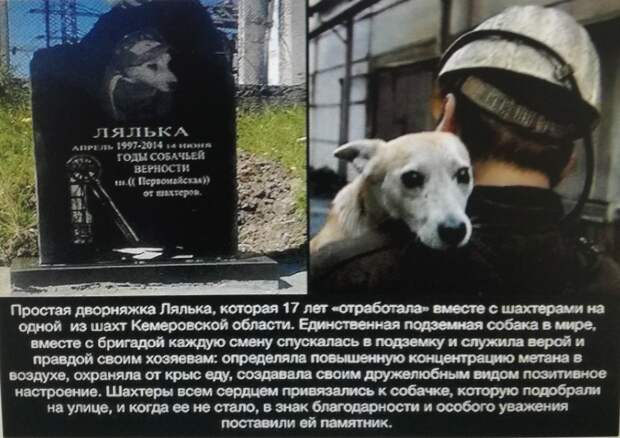 Годы собачьей верности  - памятник Ляльке ...