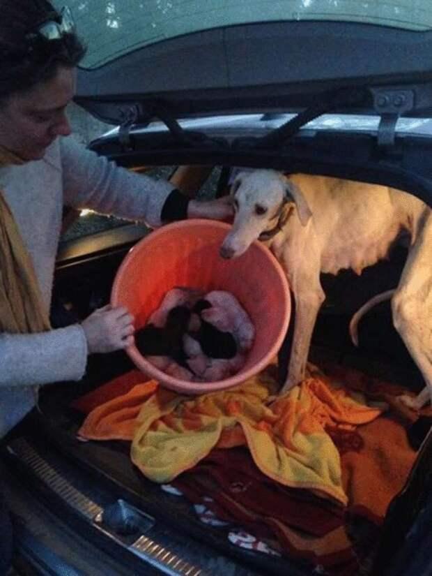 Собака со сломанными лапами прошла 3 км, чтобы привести людей к своим детям