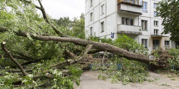 Ураганный ветер в Москве повалил несколько деревьев, есть пострадавшие